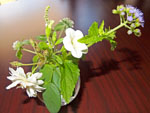 tea grace-flower 2-kimino town