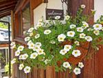 tea grace-flower 3-kimino town