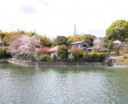 kitano sakura wakayama city